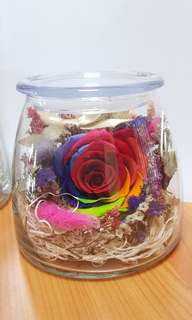 Real Preserved Colouful Rose