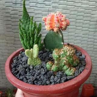 Kaktus Paket