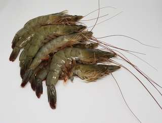 Live and Fresh Big Prawns