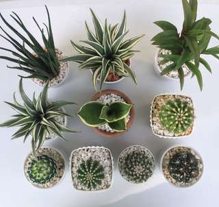 Air Purifying & Interior Plants