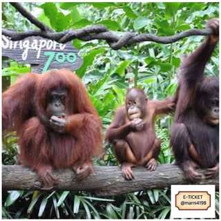 Singapore Zoo 1-Day Admission Etickets