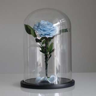 Top of the Range - Premium Preserved Ecuadorian Roses in Giant Glass Dome