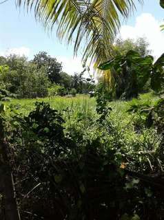 Lot For Sale Dauis, Panglao Island, Bohol (Near Beach)