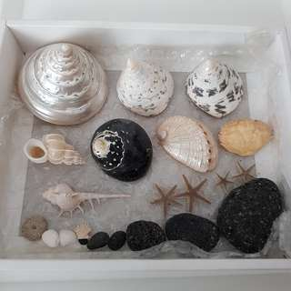 Assorted Exotic Beautiful Aquarium Ocean Sea Shells Corals Collection