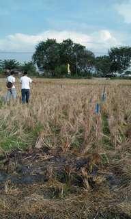 Tanah kavling murah di muara bakti babelan