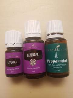 FOC NM BN young living lavender essential oil YLEO