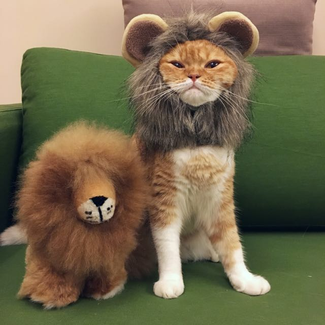 & Cat Lion Main Costume Wig - 2 size Pet Supplies on Carousell