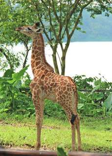 Singapore Zoo 😁