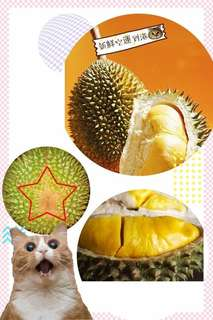 馬來西雙溪蘭貓山王榴槤HKD128/磅