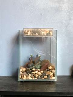 Cool Plant Fishtank