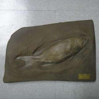 C154 魚化石四34x23x3.5cm