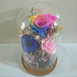 Preserved Rainbow Rose