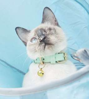 Leather collars for cats and dogs