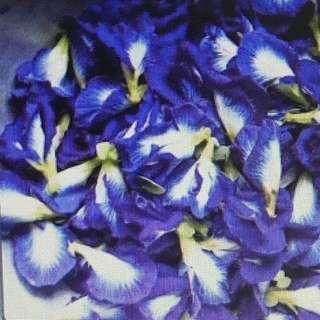 Dried blue butterfly pea flower