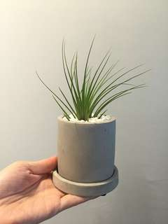 🚚 Mini Airplant Pot (with pot & tray)