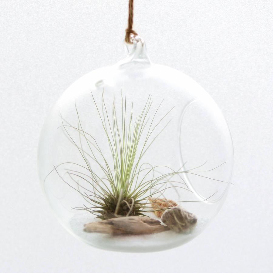 Deco Hanging Glass Globe Terrarium 10cm 15cm Gardening