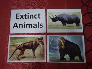 Extinct animals - BN Glenn Doman Encyclopedic flashcards