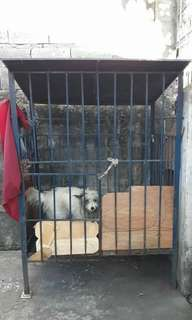 DOG CAGE FOR SALE/ KULUNGAN NG ASO