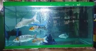 Aquarium 50 gal.