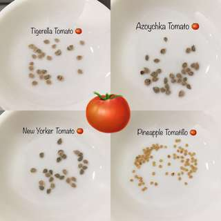 Tomato Seeds Collection Pack - Tigerella / Azoychka / New Yorker / Pineapple Tomatillo