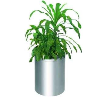 Stainless Steel Planter Pot - PNP-1302/SS (Item No: G01-465)