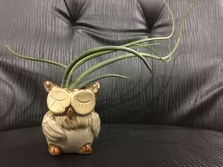 Airplant with owl pot stand