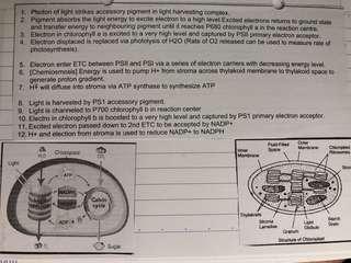 H2 Biology Notes (New Syllabus)