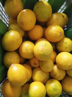 Stock Terbatas, Lemon California