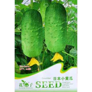 現貨2包 (食用蔬菜系列)日本小黄瓜種子