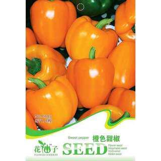 現貨1包 (食用蔬菜系列)橙色甜椒種子