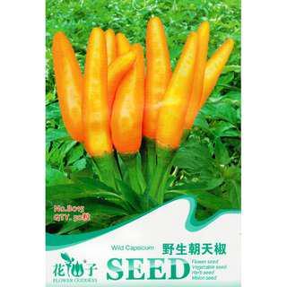 現貨1包 (食用蔬菜系列)野生朝天椒種子