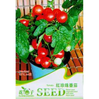 現貨1包 (食用蔬菜系列)红珍珠番茄種子