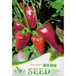 現貨1包 (食用蔬菜系列)紫色辣椒種子