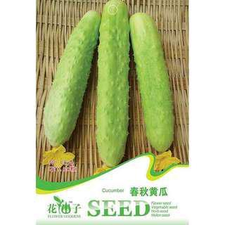 現貨1包 (食用蔬菜系列)春秋黄瓜種子
