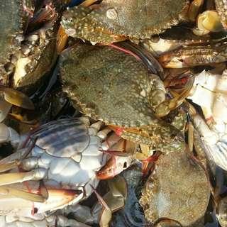 🚚 Fresh / Live Flower Crabs