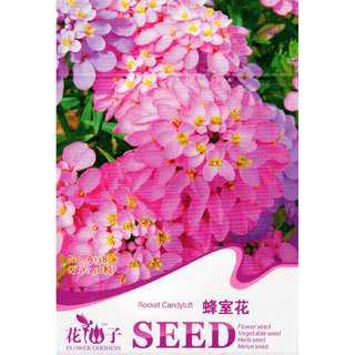 """""""現貨1包""""  (觀花系列)蜂室花種子"""