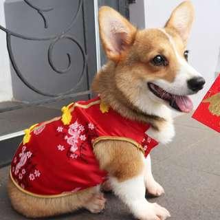 cheongsam anjing baju anjing