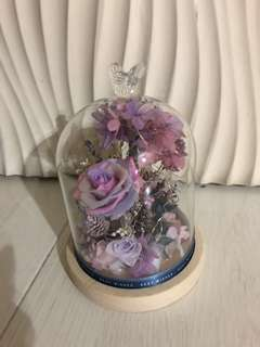 Preserved Flower in a Jar with LED