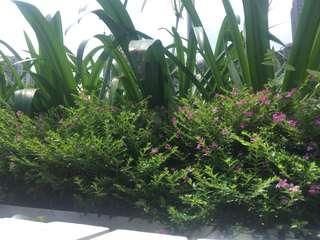 樹木,園藝,園境設計