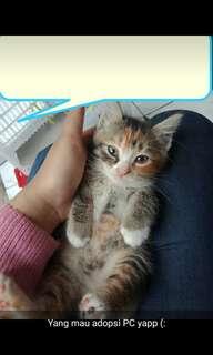 oper adopsi bagi yg minat wa ; 085846148685