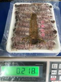 🚚 螳螂蝦