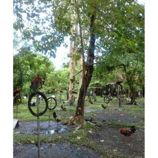 Residential Lot for Sale (Brgy. Tangub, Bacolod City)