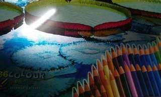 木顏色 colour pencils