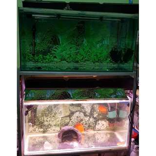 Two 3x1.5x1.5Ft fish tanks with stand