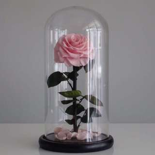 🚚 Premium Preserved Ecuadorian Roses in Big Glass Dome