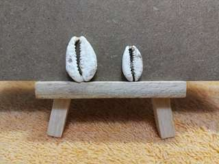 LOT China Shang Dynasty: Natural Cowrie Shell X 2, In Two Sizes Variety (中国商代/早期西周:天然贝壳钱, 一大一小两枚一票)