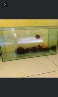 Akuarium ikan