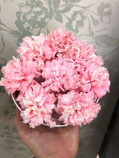 PRESERVED pink carnations flower  LAST MIN  mother's Day present