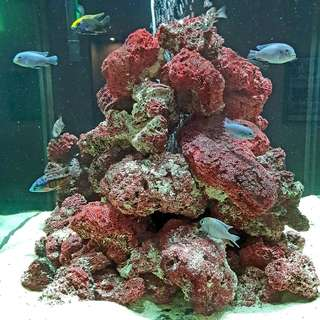 👉 Aquatic Red Coral