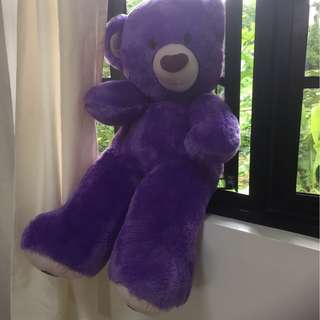 Puple teddy